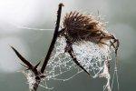 Alfons Herr - Herbstliches Spinnennetz
