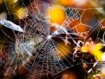 Alfons Herr - Spinnennetz im Gegenlicht