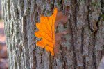 Kurt_Stratil-Herbstlaub