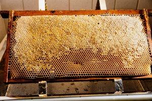 reife Honigwabe- dann entdeckeln- dann schleudern