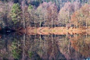 Spiegelungen-im-Aubachsee
