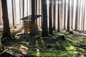 Alfons-HerrWildfutterstelle-im-Nebelwald