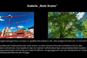 Rote-Krane-099