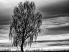 Alfons Herr;Einsamkeit