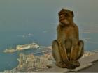 Katja Hofmann - Morgens auf Gibraltar