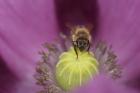 Rainer Kempf - Von Angesicht zu Angesicht mit der Honigbiene (Apis)