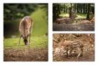 Stefan Durchholz - Collage heimischer Waldtiere
